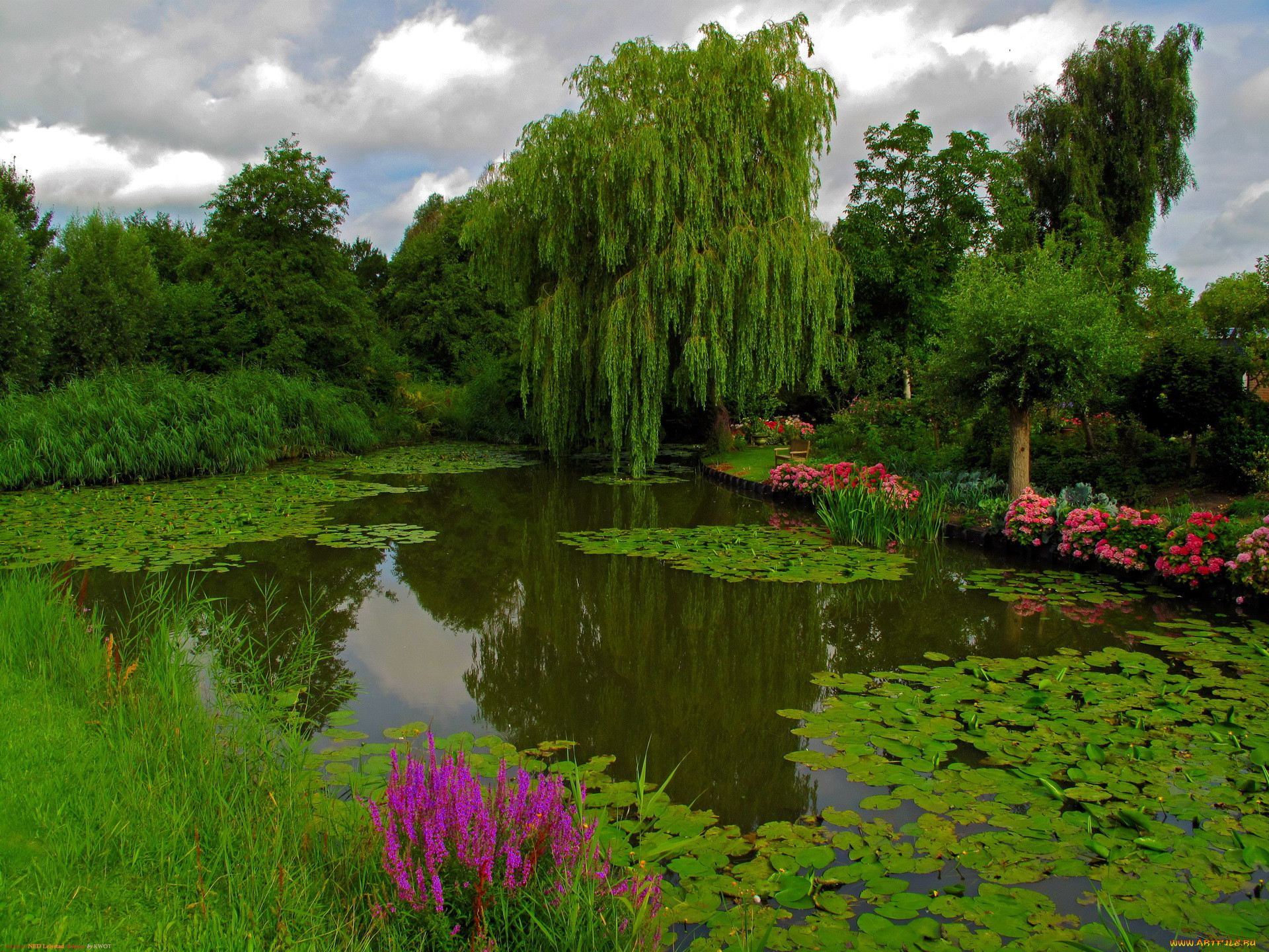 стол картинки деревья цветы трава вода груди